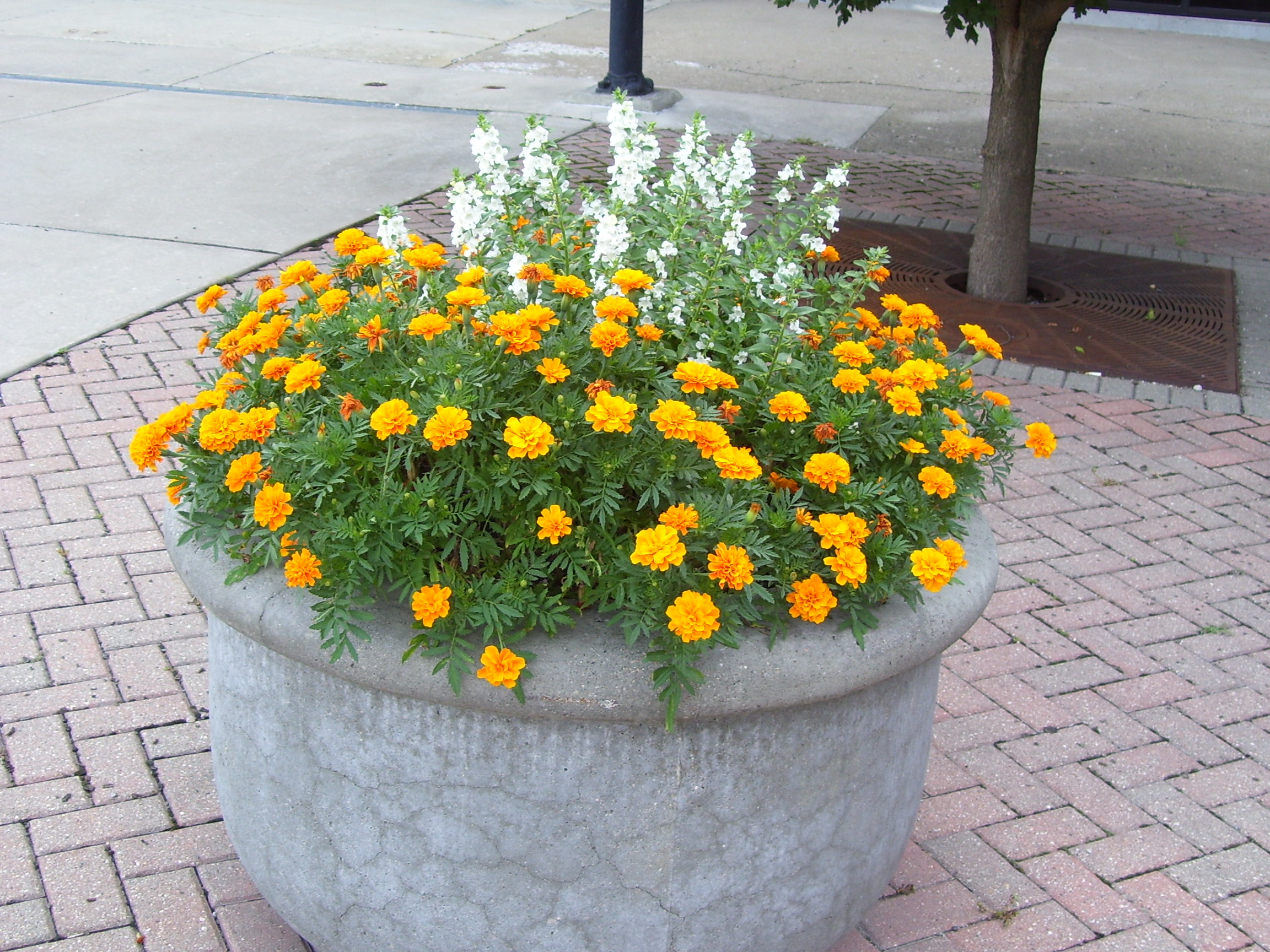 Flower pot on the Square.